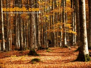 20-Urbasa_Andia_Zeharkaldia_Travesia_Montana_Mendia_Euskal_Herria_Pais_Vasco_Pays_Basque_Basque_Country_Menditxik_Mendi_Arroila_Gidariak_Guías_montaña_barrancos_mountain_canyon_guide_montagne_canyon_guides